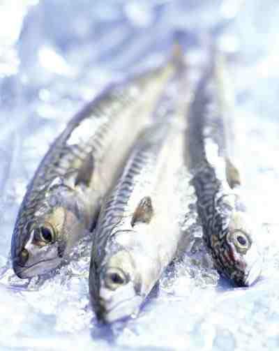 omegafish