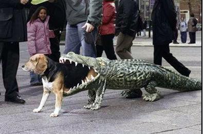 dog-aligator-costume