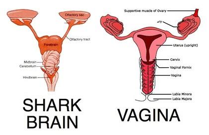 Shark/Uterus