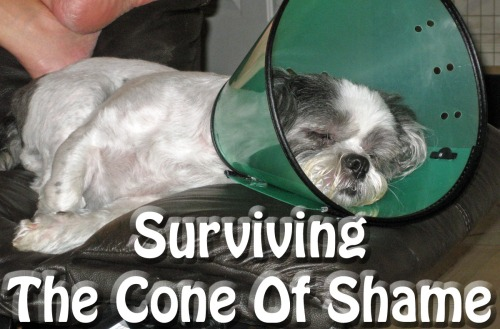 cone-of-shame