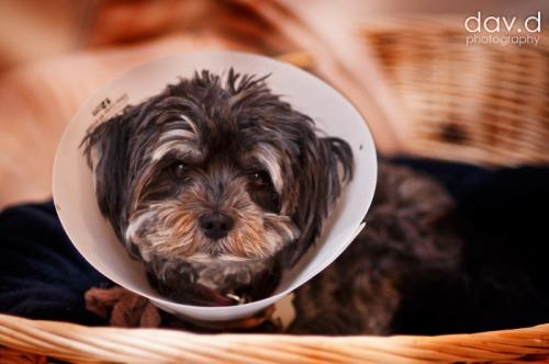 dog-cone-of-shame