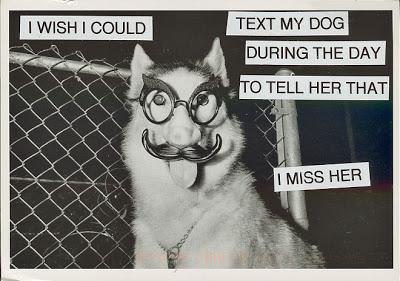 dogtext